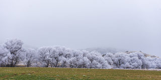 Rime images & rime landscapes. Natural beauty of winter;ambiance frost Stock Images