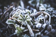 Rime on leaves. Covered on edges of white crystals. Winter is coming. Autamn season. Close-up photo. Macro photography Royalty Free Stock Photos