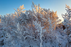 The rime in the morning. The photo was taken in Wusong island Ulla manchu town Longtan district Jilin city Liaoning provence,China Stock Photos