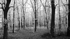 Rime over trees Stock Photos