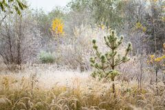 Rime on plants at cold winter day Stock Photo