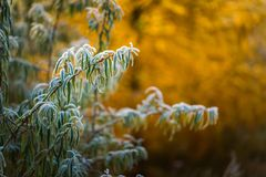 Rime on plants at cold winter day Royalty Free Stock Photography
