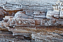 Rime on rotten wood Stock Photography