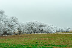 Rime scenery. Natural beauty of winter;ambiance frost Stock Photo