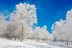 The rime snow blue sky Royalty Free Stock Image