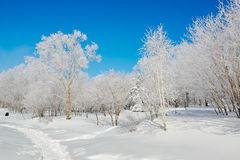 Rime on the snowfield and blue sky Royalty Free Stock Photo