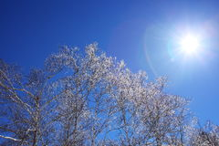 Rime and sun Stock Photography