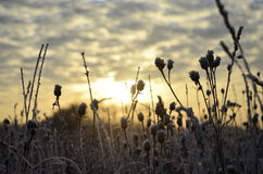 Rime and sun. Morning sun light at the autumn field Stock Photo