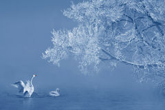 Rime And Swans Royalty Free Stock Photo