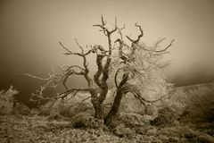 Rime tree Royalty Free Stock Images