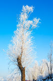 The rime of tree. The photo was taken in Wusong island Ulla manchu town Longtan district Jilin city Liaoning provence,China royalty free stock photos