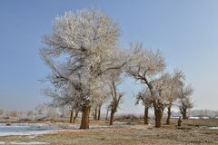 The rime tree Stock Photography