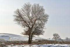 The rime tree Royalty Free Stock Photo