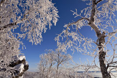 Rime on trees Royalty Free Stock Photography