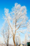 The rime of trees. The photo was taken in Wusong island Ulla manchu town Longtan district Jilin city Liaoning provence,China Stock Photo