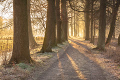 Rime in Trees. Rimed tree lane  on a frosty morning in febrary Stock Photography