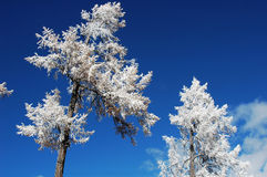 Rime in winter Stock Image