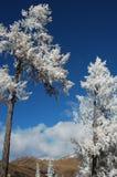 Rime in winter stock image