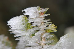 Rime in the winter Stock Image