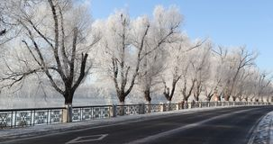 the trees with beautiful rime by the road in jilin, China stock photo