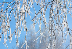 Rimed branches of tree. Snow covered rimed branches of tree Stock Photography