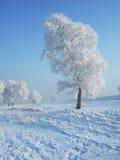 rimed tree arkivfoton