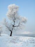 rimed tree royaltyfri bild