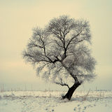 Rimed Trees Royalty Free Stock Photography