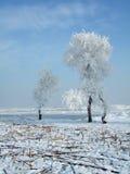 rimed trees arkivbilder