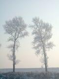 rimed trees arkivfoto
