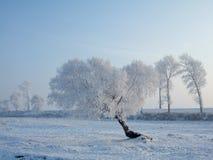 rimed trees royaltyfria bilder