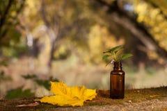Rimedi del fiore di Bach - aromaterapia, bottiglia fotografia stock