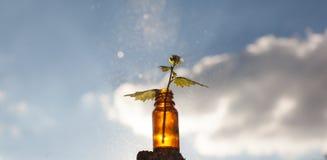 Rimedi naturali - Herb Therapy Fotografia Stock Libera da Diritti