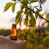 Rimedi naturali - olio, di erbe Fotografia Stock