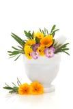 Rimedio del fiore Immagine Stock