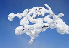 rimfrost Royaltyfri Foto