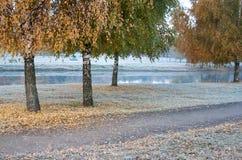 rimfrost Arkivbilder