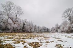 rimfrost Arkivfoto