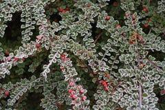 rimfrost Royaltyfria Foton