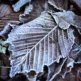 rimfrost Royaltyfri Bild
