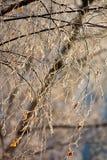 rimfrost Arkivbild