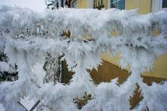 Rimfrost eller rimfrost på ett metallstaket royaltyfria foton