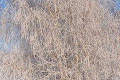 Rimfrost för frost för vinterträdsnö Arkivbilder