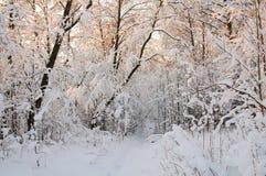 Rimfrost och rimfrost på träd Arkivbild