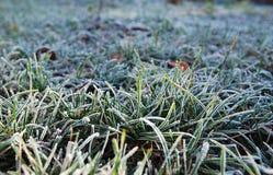 Rimfrost på ett gräs Royaltyfri Fotografi