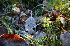Rimfrost på ett gräs Arkivfoton