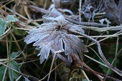 Rimfrost på ett gräs Royaltyfri Foto