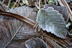 Rimfrost på ett gräs Royaltyfria Bilder