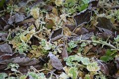Rimfrost på ett gräs Royaltyfri Bild