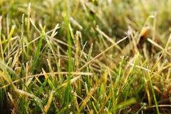 Rimfrost på gräs Arkivfoto